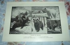 1919 Types Bears Polar Ice American Black Brown Grizzly California Seals Print