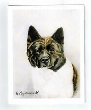 New Akita Pet Dog Portrait Notecard Set - 6 Note Cards By Ruth Maystead (Aki-4)