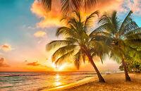 VLIES Fototapete-(1649V)-PALMEN STRAND -250x180cm-5 Bahnen -Karibik Meer Sonne