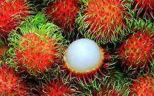 12 rambutan spiky red tree/plant/fruit seeds *10 free custard apple*