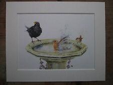 Garden birds, Wren, Robin,Blackbird in birdbath, watercolour print in Mount