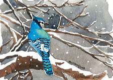 ACEO Limited Edition - Winter bluejay, Bird art print, Collectible art