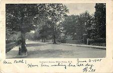 A Quiet Day on Lexington Avenue, White Plains NY 1905