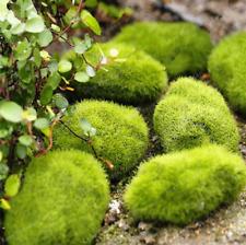 100 Pcs Seeds Moss Bonsai Ball Sagina Subulata Grass Garden Decorative Plants U