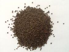 500 Black Negra Noir Schwarz Quinoa seeds samen semilla - Chenopodium quinua