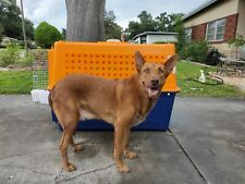 Pp70 Dog Crate travel to Australia