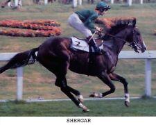 SHERGAR,  8x10 Color Photo