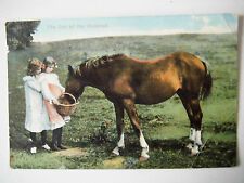The Pet of The Paddock Horse Two Pretty Girls Old Postcard 1909 Tuck Rapholette