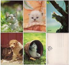 Set lot 11 pcs CAT Kitten PC post card 1970-1990th feline unused France LOVELY!