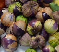 Purple Tomatillo, rare Mexican tomatillo 20+ seeds