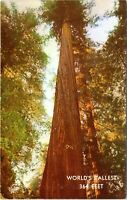 1950s Founders Tree Redwood Forest Giant Tree Weott California Postcard EE