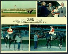 RUFFIAN - 1975 COMELY STAKES 8X10 HORSE RACING PHOTO COLLAGE!