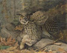 Fuertes Agassiz Louis Great Horned Owl Print 11 x 14   #5581