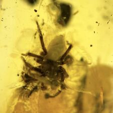 More details for jumping spider salticidae in baltic amber fossil eocene fsr432 ✔100%genuine