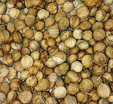 SHAGBARK HICKORY NUTS 1#($15)or buy 2# get free #!