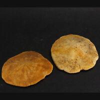 Fossil Echinoid Monostychia x2 Miocene, Riverlands Sth. Australia EA8019