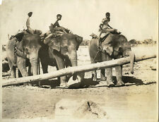 ELEPHANTS CARRYING LOG IN INDIA & ORIGINAL VINTAGE PHOTO