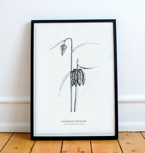 Botanical black and white print- Snakeshead Fritillary