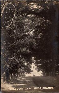 Real Photo Postcard Locust Lane in Mesa Grande, Arizona~137167