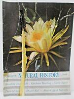 Natural History Magazine January 1948 Cinchona Hunting Cattle Egret Desert Rat