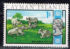 British Cayman Islands Fauna Farm Animals Brahmin Cattle Cows stamp 1950 MLH