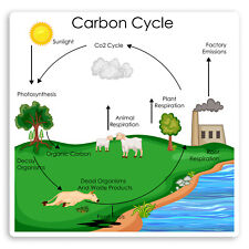 1 x 15cm Carbon Cycle Diagram Vinyl Stickers - Science Recycling Sticker #34938