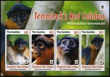 2016 Gambia, Monkeys, Temminck's Red Colobus, WWF,  souvenir sheet, MNH
