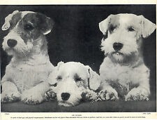 SEALYHAM TERRIER THREE DOGS ON GUARD LOVELY OLD 1934 DOG PRINT
