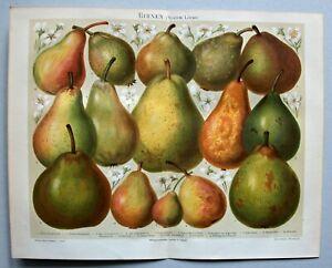 Obst, Kernobst, Birnen - 15 Abbildungen - Chromolithographie 1896