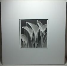 """Black & White picture / poster of calla lily flower w/ white mat unframed 18""""sq."""