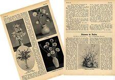 Fiori in vasi * contributo V. Prof. Udo Dammer con 12 fotografie di 1909
