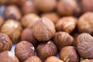 100g Natural Hazelnuts Nature & Untreated Round Römer Nut Nuts