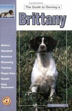 Guide to Owning a Brittany