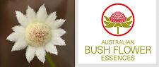 FIORI AUSTRALIANI Little Flannel Flower SERIETA' SEVERITA'/Giocosità-Spontaneità