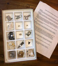 Fossil Collection Geology Science Educational Classroom