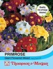 Thompson & Morgan - Primrose T&M Special Giant Flowered Mixed - 25 Seed