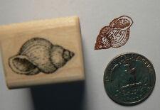 "P24 Miniature sea shell 0.3x0.7"""