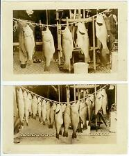 c1910 huge fish catch Real Photos