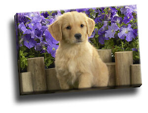 Yellow Labrador Puppy Giclee Canvas Pet Life Picture Art