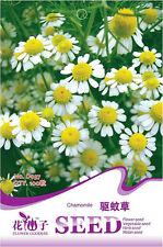 1 Pack 100 Chamomile Seeds Pelargonium Graveolens Mozzie Buster Garden Herb D037