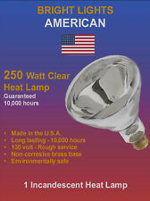 250W, 10k hour, BR40 Incandescent Heat Lamps (12)