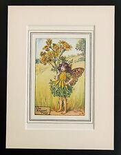 Yellow Ragwort Flower Fairy - Mounted Original 1930 Cicely Mary Barker Print