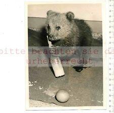 ORIGINAL PRESSEFOTO:1956 RUSSION BABY BEAR PRESENT for PRINCESS ANNE by KRUSCHEV