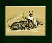 Lucy Dawson ~ French Bulldog & Siamese Cat Colour ~ Print Genuine Vintage 1937