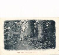 VANCOUVER BC – Stanley Park Forest Giants – udb (pre 1908)