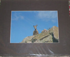 PHOTO ART MOUNTAIN GOAT MT EVANS CO 5X7 MATTED TO 8X10 SIGNED #'D 7/75