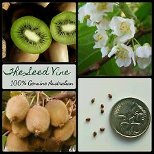 20+ ORGANIC KIWI FRUIT SEEDS (Actinidia deliciosa) Edible Fruit Flower Vine