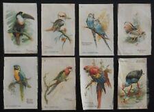 More details for birds of the tropics 1913 godfrey phillips medium silks 8/12