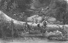 BRAZIL. Organ Mountains. fallen monarch 1880 old antique vintage print picture
