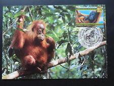monkey orang-utan maximum card United Nations UNO 70311